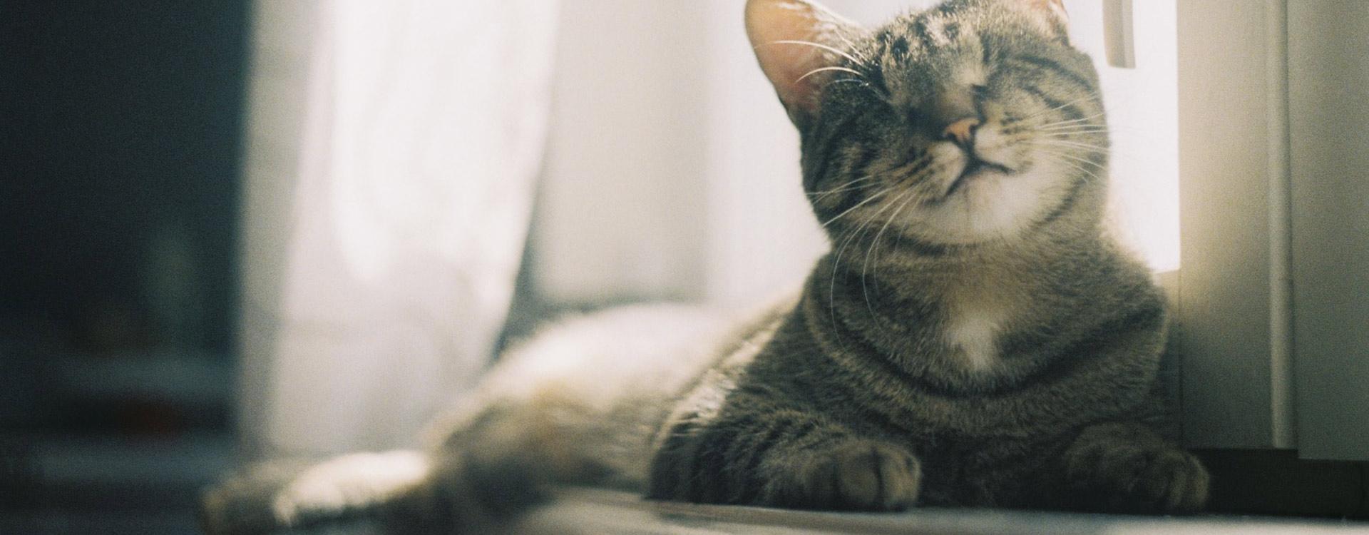 profilaktyka zwierząt Kraśnik